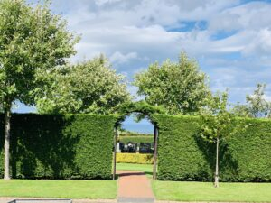 A picture of a hedge archway in the cemetery